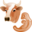 cow,embryo icon