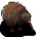 Bird, Flightless, Kiwi icon
