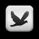 animal,bird icon