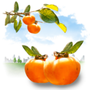 fruits,persimmon icon