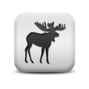 animal,moose icon