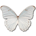 morphopolyphemus,butterfly icon