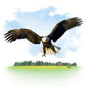 animals,eagle icon