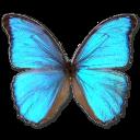 morphogodarti,butterfly icon