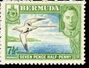 Bermuda TropicBird icon