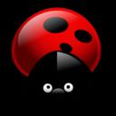 ladybug,bug,insect icon