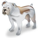 dog, pet, bulldog icon