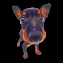 Puppy 8 icon