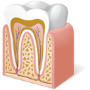 Anatomy, Tooth icon