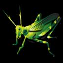 grasshopper,animal icon