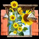 Flowers, Sunflowers, Window icon