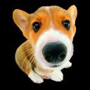 Puppy 10 icon