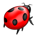 animal, bug, ladybird, insect icon